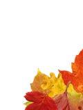 Herbstblätter. stockfotografie