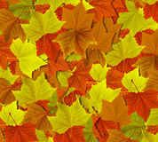 Herbstblätter Lizenzfreies Stockfoto