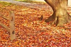 Herbstblätter -2 Stockfotografie