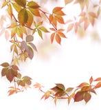 Herbstblätter Stockfotos