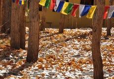 Herbstblätter lizenzfreie stockfotografie