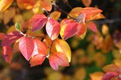 Herbstblätter Stockbild