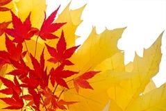 Herbstblätter Stockfoto