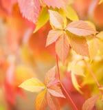 Herbstblätter Stockbilder
