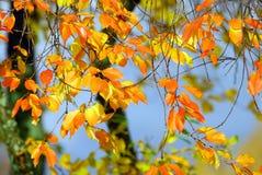 Herbstblätter Lizenzfreies Stockbild