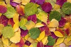 Herbstblätter als Beschaffenheit Lizenzfreie Stockfotografie