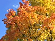 Herbstblätter auf Baum Stockbild