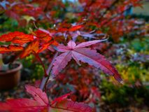 Herbstblätter auf dem Baum lizenzfreies stockbild