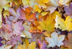 Herbstblätter auf dem Boden lizenzfreie stockfotos