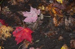 Herbstblätter auf dem Boden Stockbild