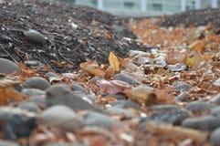 Herbstblätter auf dem Boden Stockbilder