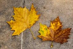 Herbstblätter auf dem Fußboden Stockfotos