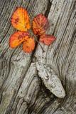 Herbstblätter auf dem hölzernen Hintergrund Lizenzfreie Stockfotografie