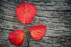 Herbstblätter auf dem hölzernen Hintergrund Stockfoto