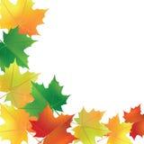Herbstblätter auf dem weißen Hintergrund Lizenzfreie Stockfotografie