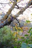 Herbstblätter auf den Bäumen Stockfotos
