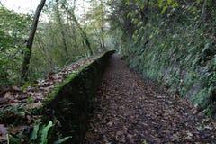 Herbstblätter auf der langen Weisenansicht Stockfotos