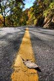 Herbstblätter auf der Straße Stockfotos