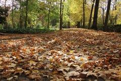 Herbstblätter auf der Straße und den Bäumen Stockbild