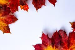Herbstblätter auf einem weißen Hintergrund lizenzfreie stockfotografie