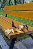Herbstblätter auf einer Bank Stockbild