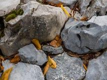 Herbstblätter auf Felsen stockfotografie
