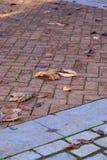 Herbstblätter auf Gehweg stockfotografie