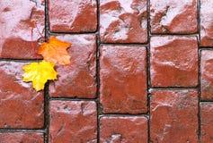 Herbstblätter auf gepflasterter Straße Stockfotos