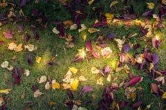 Herbstblätter auf grünem Gras Lizenzfreie Stockfotografie