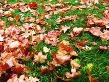 Herbstblätter auf grünem Gras Lizenzfreies Stockfoto