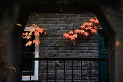 Herbstblätter auf Hauswand Stockfoto