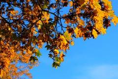 Herbstblätter auf Hintergrund des blauen Himmels Stockbild