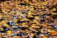 Herbstblätter auf Wasser lizenzfreies stockbild