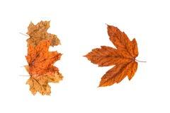Herbstblätter auf Weiß Stockbild