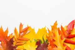 Herbstblätter auf weißem Hintergrund Lizenzfreie Stockfotografie