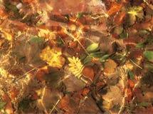 Herbstblätter, die durch Wasser sich reflektieren Stockbild