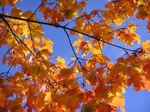 Herbstblätter an einem sonnigen Tag Stockfoto
