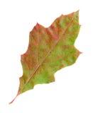 Herbstblätter einer roten Eiche, Oberfläche stockfotos