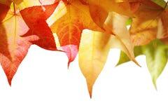 Herbstblätter getrennt lizenzfreies stockfoto