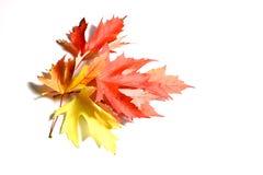 Herbstblätter getrennt auf weißem Hintergrund Stockfotografie