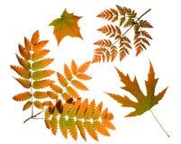 Herbstblätter getrennt worden Stockfotografie