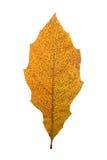 Herbstblätter getrennt worden Stockfotos
