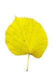 Herbstblätter getrennt worden Lizenzfreie Stockfotos