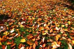 Herbstblätter im Sonnenlicht stockfotografie