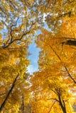 Herbstblätter mit dem Hintergrund des blauen Himmels Lizenzfreies Stockbild