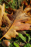 Herbstblätter mit Wassertropfen Stockfotografie