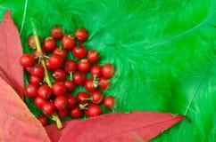 Herbstblätter und -beeren Lizenzfreie Stockfotos
