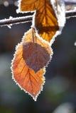 Herbstblätter und -frost Stockfoto