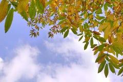 Herbstblätter und -himmel Stockfotos