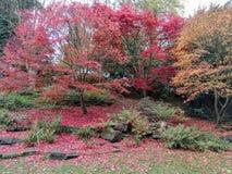 Herbstblüte stockbilder